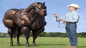 Bilder Von Pferden : 10 unglaubliche pferde die es wirklich gibt youtube ~ Frokenaadalensverden.com Haus und Dekorationen