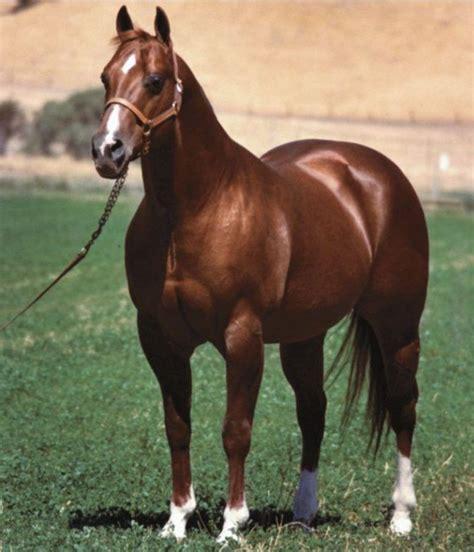 horse bloodlines ranch horses quarter doc bar aqha westernhorseman barrel thoroughbred horseman western reining american racing
