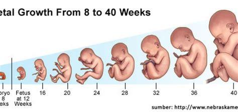 Tips Menjaga Kandungan 5 Bulan Kebutuhan Gizi Ibu Hamil Pada Trimester Pertama
