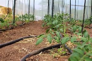 Tomaten Düngen Hausmittel : tomaten richtig d ngen gie en und mulchen plantura ~ Whattoseeinmadrid.com Haus und Dekorationen