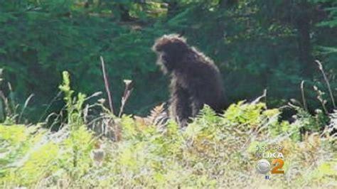 bigfoot hiding   woods  western pennsylvania