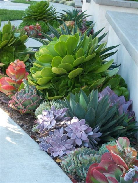 Succulent Care  Like Synthetics Are Succulents? Fresh