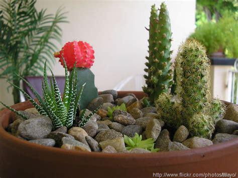 cactus dish garden a dish garden