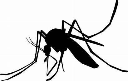 Hewan Darah Nyamuk Penghisap Obat Pil Malaria
