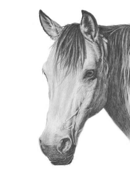 shaded horse head shading skills   horses horse