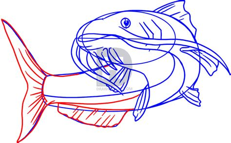 draw  catfish step  step drawing guide