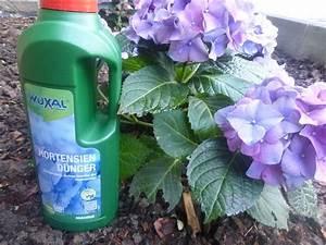 Blaudünger Für Hortensien : tester gesucht wuxal calciumd nger hortensiend nger im test ~ Michelbontemps.com Haus und Dekorationen