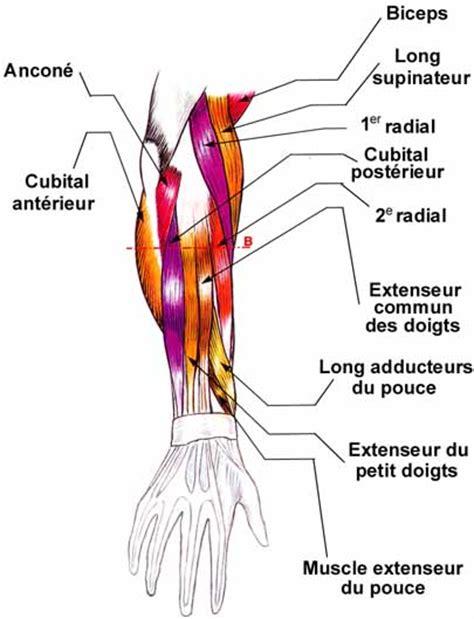 douleur avant bras du d 233 cocheur