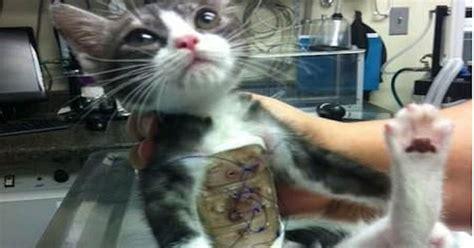 cat  born   rib cage pictures