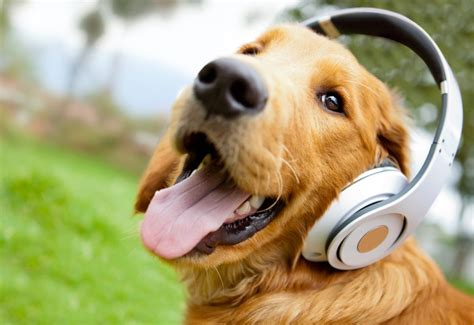 playlists  pups   songs  calming health