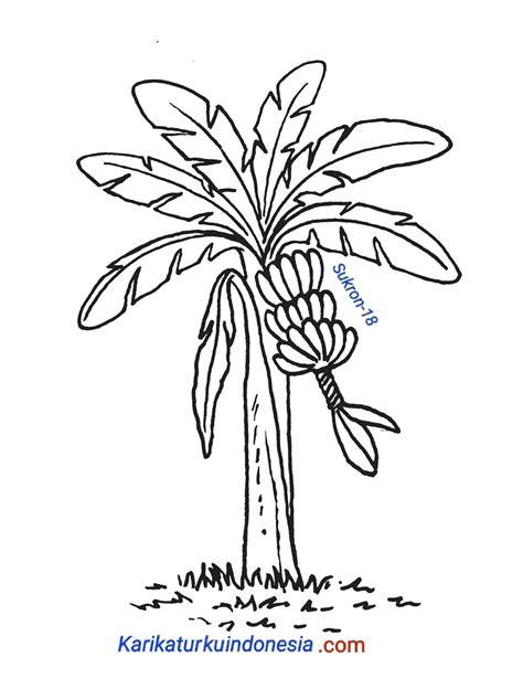 contoh gambar mewarnai pohon pisang kataucap