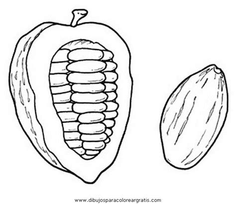 Kleurplaat Chocolade by Cacao Pod Coloring Page Chocolade Cacao Beans