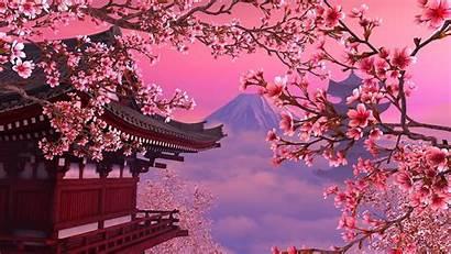 Sakura Tree Wallpapers Blossom Cherry Japanese Japan