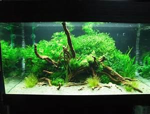 Aquarium Einrichten 60l : aquarium einrichten anleitung mj11 hitoiro ~ Michelbontemps.com Haus und Dekorationen
