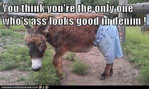 Animal Capshunz - donkey - Funny animal pictures with ...