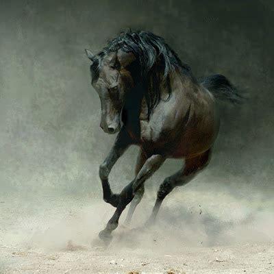 stunning fantasy art horses unicorns pegasus curious