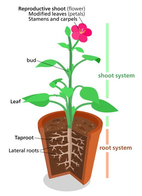 plant structure information fun facts sciencefun