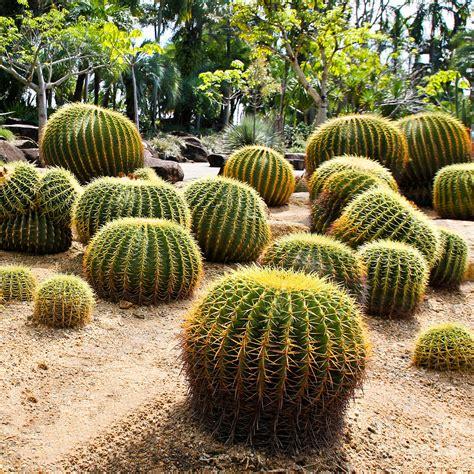 Giant Cactus In Garden Thailand Photograph by Doraclub