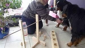 Hundeplanschbecken Selber Bauen : hunde testen selbstgebasteltes intelligenzspielzeug youtube ~ Markanthonyermac.com Haus und Dekorationen