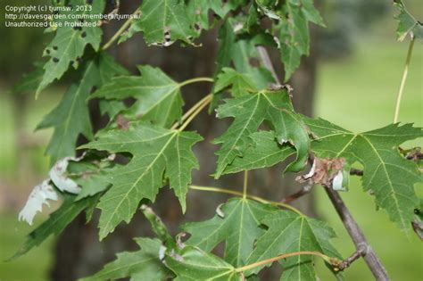 Backyard Identification by Plant Identification Closed Backyard Tree Identification
