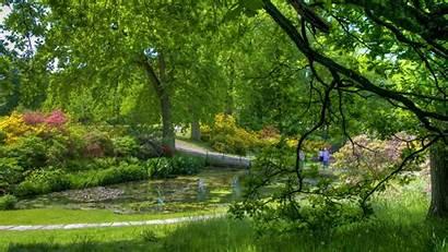 Pond Garden Trees Background Desktop Wallpapers Koi