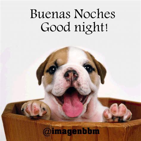 bonitos perritos  frases de buenas noches en imagenes