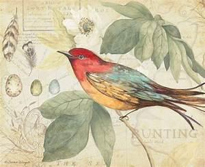 1000+ images about Birds vintage on Pinterest