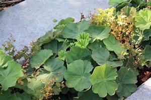 Couvre Sol Vivace : les plantes couvre sol secret de jardinier malin ~ Premium-room.com Idées de Décoration