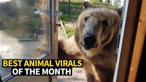 Top Animal Photos of 2019