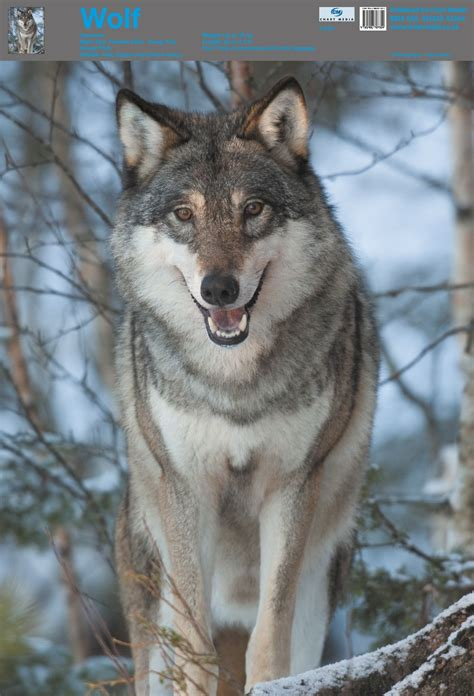 Posters Uk Wolf Posters Wholesale Wall Posters Free