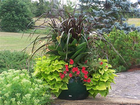 Container Gardening  Brantim Country Garden Centre