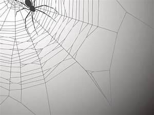 Faire Fuir Les Araignées : comment fabriquer une bombe spray qui fait fuir les araign es ~ Melissatoandfro.com Idées de Décoration