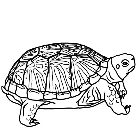 turtle clipart black and white best turtle clipart black and white 12964 clipartion