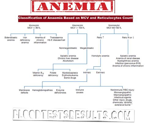 types  anemia  full anemia definition chart