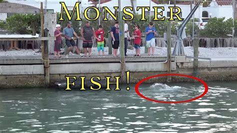 dock florida fishing boat fish monster catch grouper