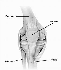 Diagram Of The Human Knee