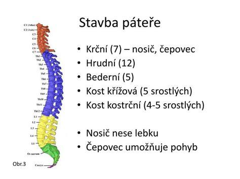 Nejdelší kost v lidském těle