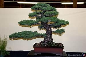 Bonsai Kaufen Berlin : bonsai kaufen bonsai einebinsenweisheit ~ Orissabook.com Haus und Dekorationen