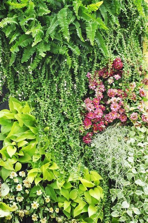 Images Of Vertical Gardens by Vertical Garden Stock Photo Colourbox