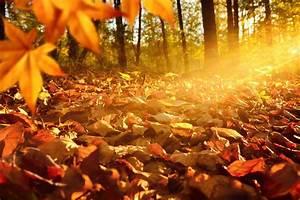 Schöne Herbstbilder Kostenlos : sch ne herbstbilder richtig fotografieren in sch ne ~ A.2002-acura-tl-radio.info Haus und Dekorationen