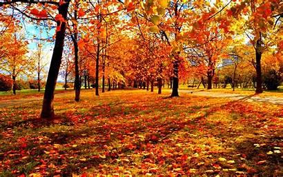 Autumn Fall Leaves Season Forest Tree Landscape