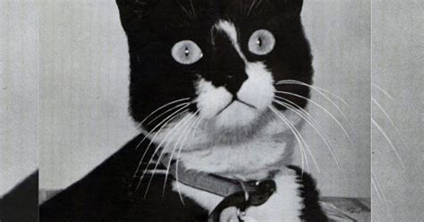 war hero cat  protected vital food rations