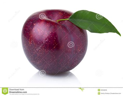 plum and purple ripe purple plum fruit with green leaves royalty free stock image image 30948236