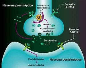 Condiciones causadas por una deficiencia de serotonina Salud y Bienestar Sott net