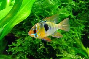 Poisson Aquarium Eau Chaude : les poissons en aquaponie aquaponie ~ Mglfilm.com Idées de Décoration