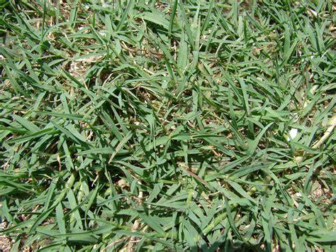 Seasonal Lawn Maintenance Guide For Atlanta, Ga