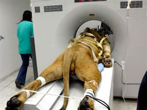 how does it take to get cat scan results story the who got a cat scan business insider