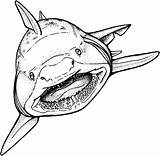 Shark Coloring Printable sketch template