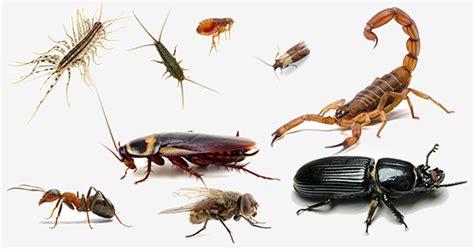 pest service in springs ga