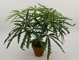 Hanf Zum Abdichten : hanf pflanze 40cm im topf ga kunstpflanzen k nstliche ~ Lizthompson.info Haus und Dekorationen
